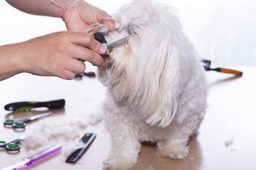 Corte de pelo canino.
