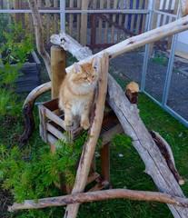 Katze im Außengehege