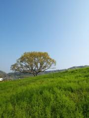 草原の大きな木