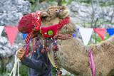 devenin ipinden çekmek