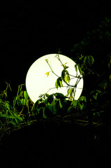 Big round lantern amidst grass and foliage in the night