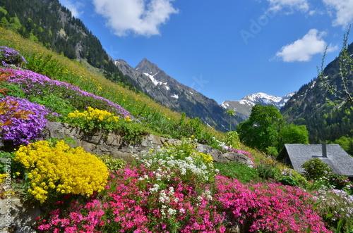 Deurstickers Alpen Blumen und Flora im Gebirge