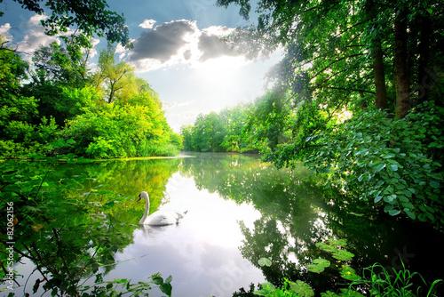 Papiers peints Cygne Swan on calm river