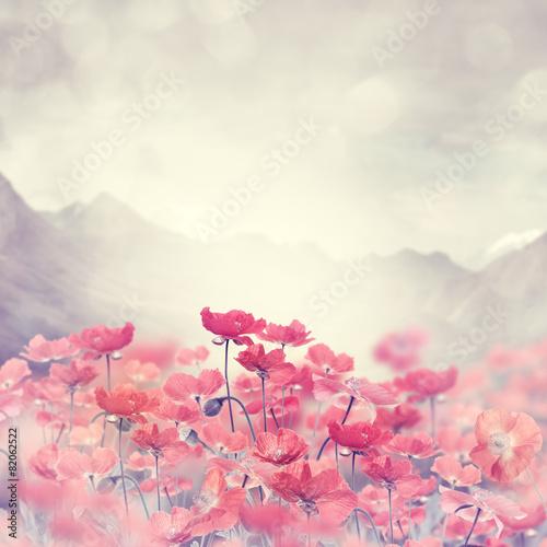 Poppy Flowers - 82062522