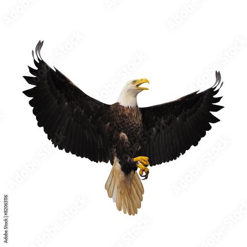 Aluminium Vogel Bald eagle.