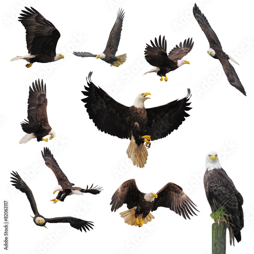 Fotobehang Vogel Bald eagles.