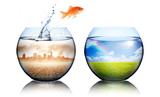 Global Warming Concept - goldfish jump from pollution to green - 82064140
