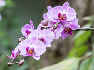 The blossoming orchid in park of the Mediterranean city