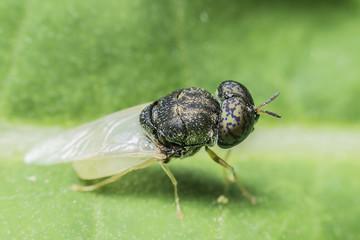 Flies cause diseases