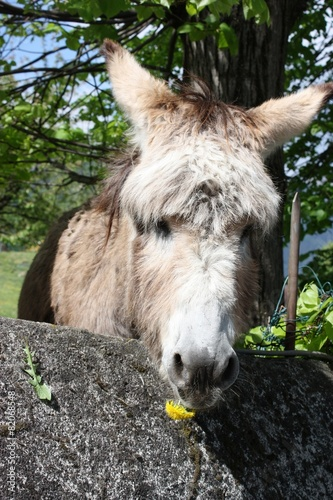 Poster Ezel Alles Liebe für Dich! - Hübscher Esel mit gelber Blume