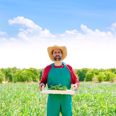 Farmer man harvesting onions in orchard field