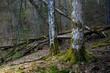 Obrazy na płótnie, fototapety, zdjęcia, fotoobrazy drukowane : Piękno Dzikiego lasu