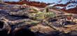 tarantula Poecilotheria rufilata - 82072303
