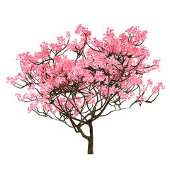 Sakura tree isolated