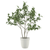 Plant tree in the pot isolated