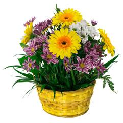 Basket of chrysanthemums and gerbera flowers