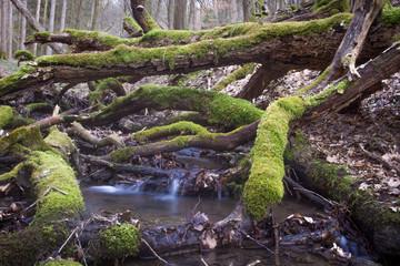 Bach im Walde
