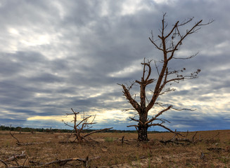 dead tree on meadow