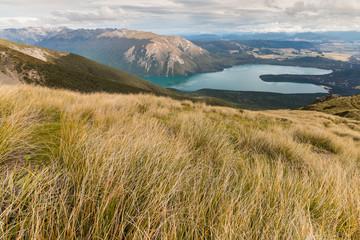 tussock growing on slopes above lake Rotoiti