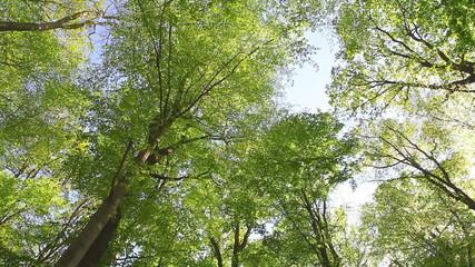 arbre forêt feuillage