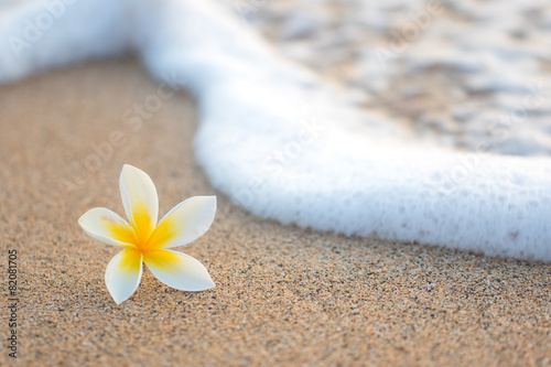 Plakat Plumeria Flower on Beach