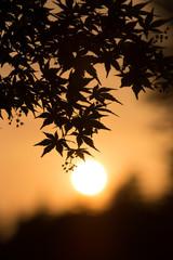 夕焼けと紅葉(もみじ)