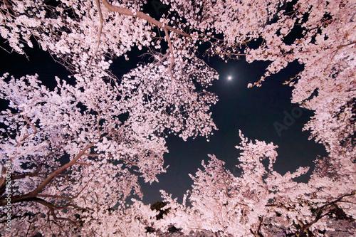 Deurstickers Lichtroze 夜桜と月