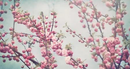 spring blossom soft pink flowers on vintage blue background
