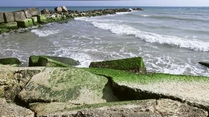 Alghe verdi sulle rocce nella baia