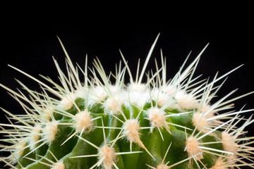 Fragment of cactus on black background