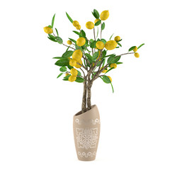 Citrus lime tree in the vase