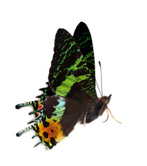 side view of green and orange butterfly
