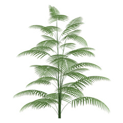 Palm plant tree isolated