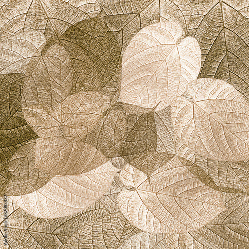 Leaves - 82095337