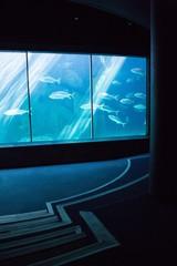 Darkest room with a fish tank