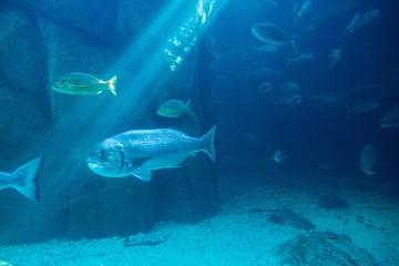 Fish swimming in a darkest tank