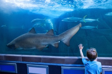 Young man touching a tank with fish and shark