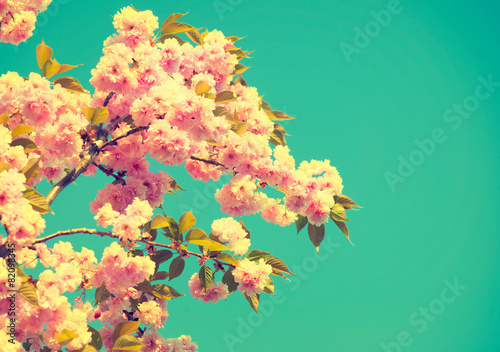 Spring blossom. Beautiful nature scene with blooming tree - 82098345