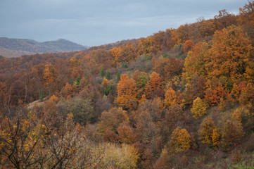 trees on the side of a mountain during autumn