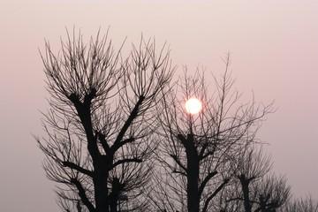 Sonnenaufgang im März Frühlingsstart in Deutschland