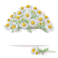 Banner with Wild Chamomile Bunch.