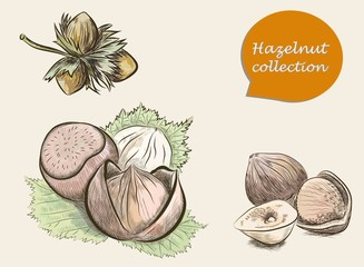 Set of colorful hazelnuts