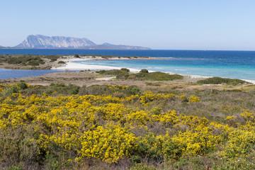 colorful coast,sardinia