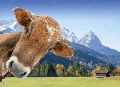 Leinwanddruck Bild Kuh vor Berglandschaft und Wiesen