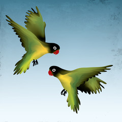 Agapornis fischeri / Two adorable birds fly in the sky