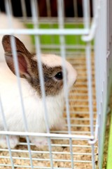 White brown rabbits in a cage.