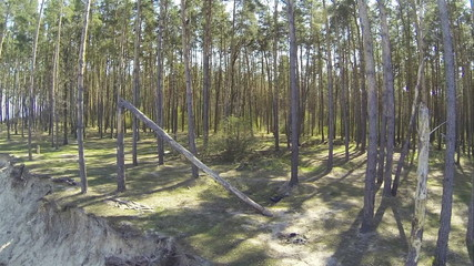 Fallen tree in  wood. Aerial