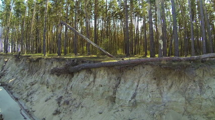 Fallen tree in  wood and coast of lake. Aerial rear fly