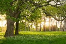 "Постер, картина, фотообои ""Sunlight in the green forest springtime"""