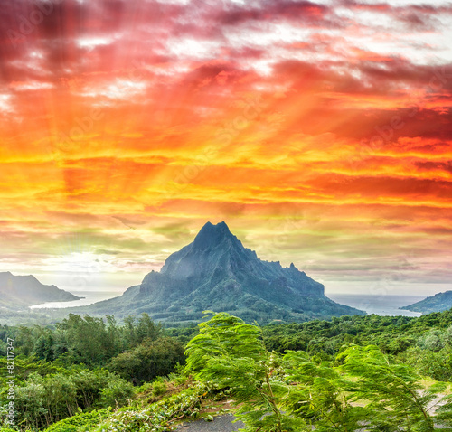 Foto op Plexiglas Eiland Mountains and vegetation of Polynesia
